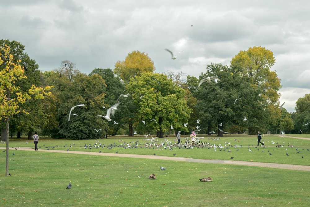 People feeding birds in Hyde Park