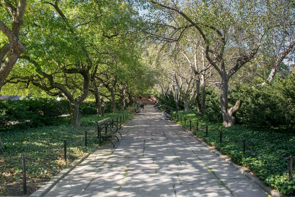 Shady Central Park Walkway