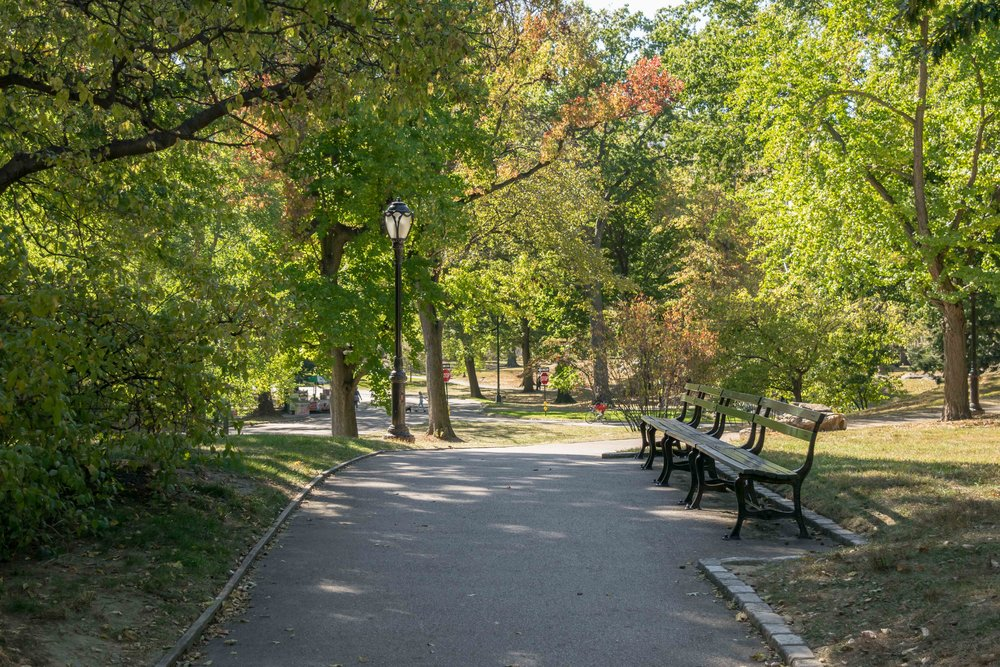 Benches and Walkway in Central Park