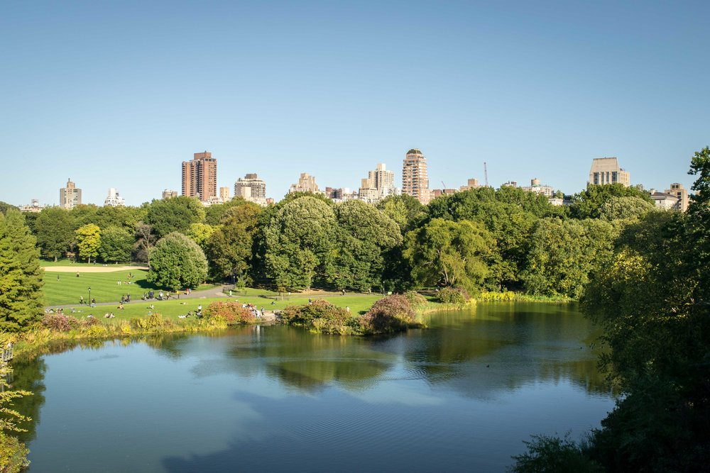 View of Central Park from Belvedere Castle Lookout