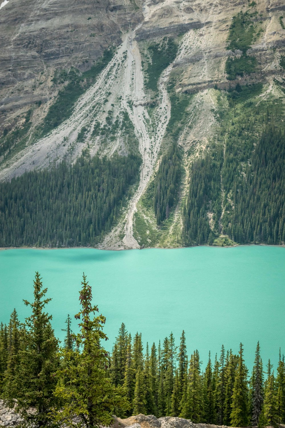 Turquoise water of Peyto Lake