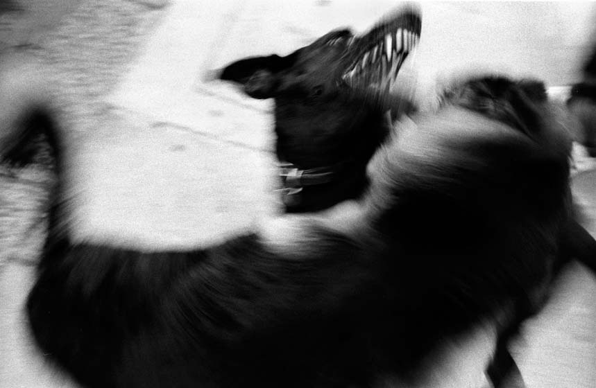 86129_06_dog_fight.jpg
