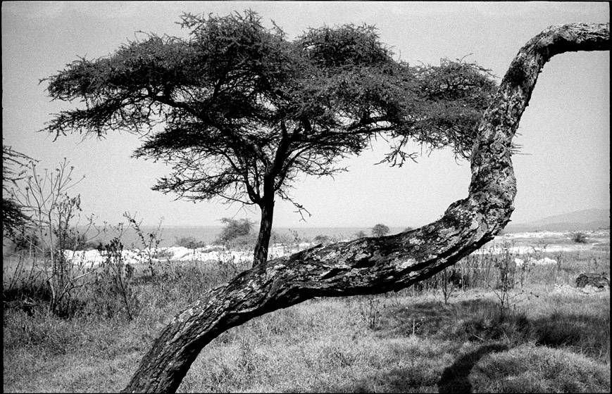 Ethio_2_15_trees.jpg