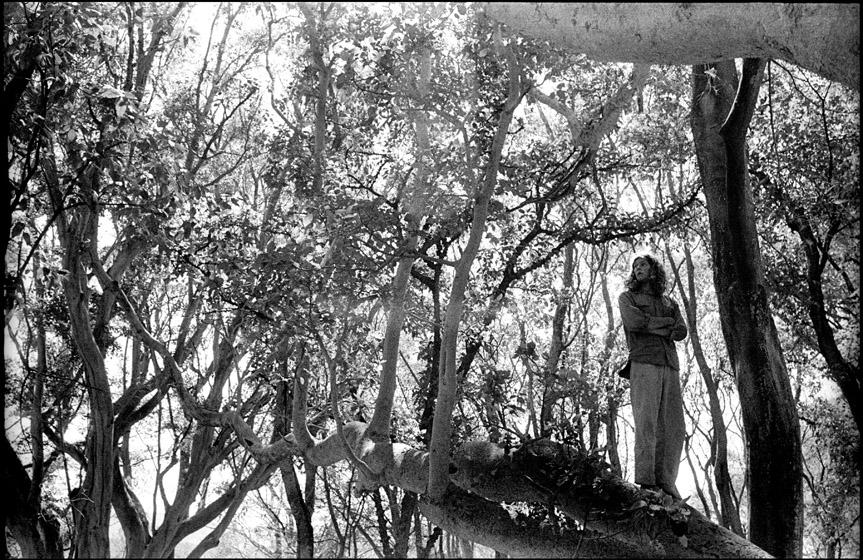 Ethio_2_19_tree_charlie.jpg