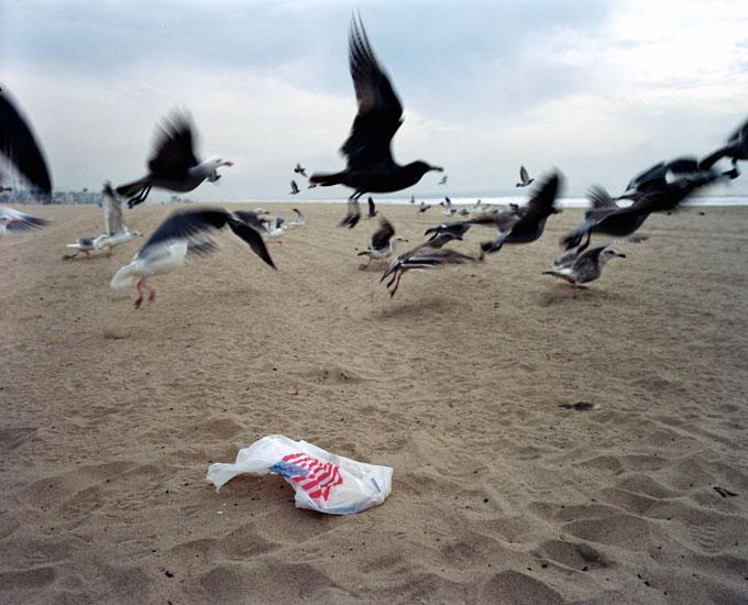 206-11-birds.jpg