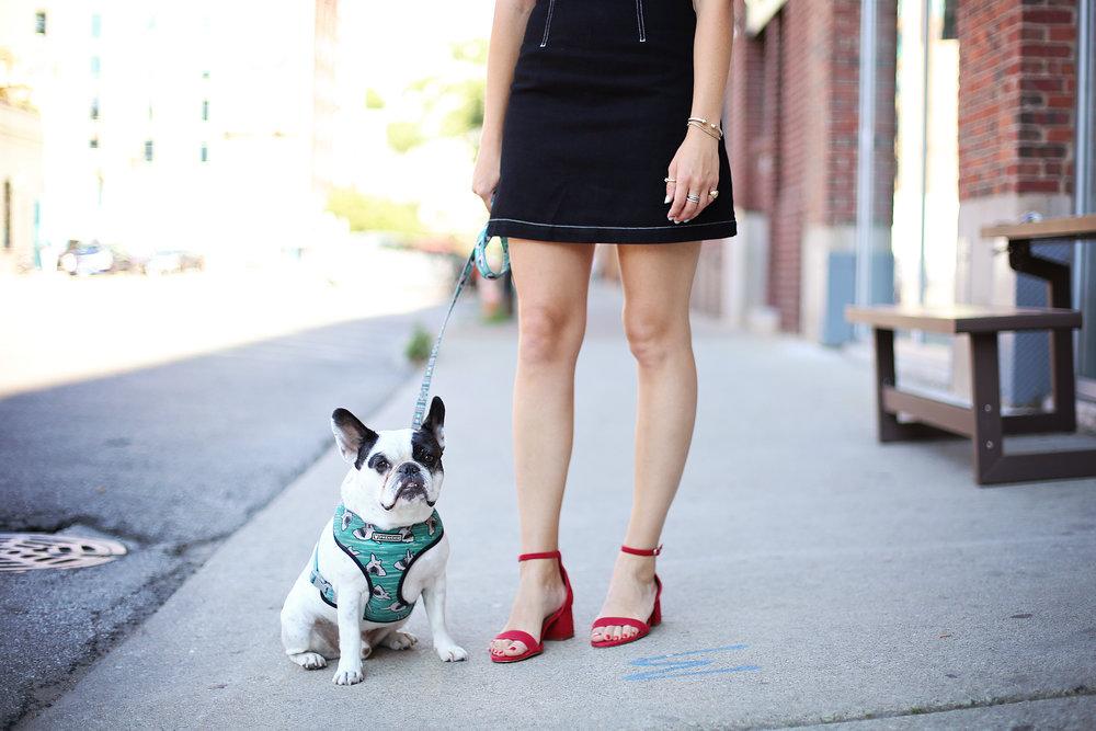 french bulldog girl in topshop denim dress