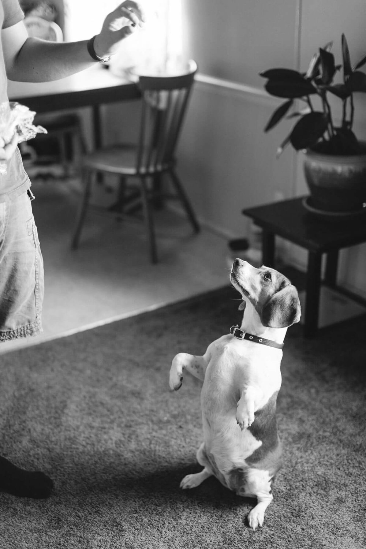pet-portraits-the-light-and-glass-wedding-photography-20.jpg