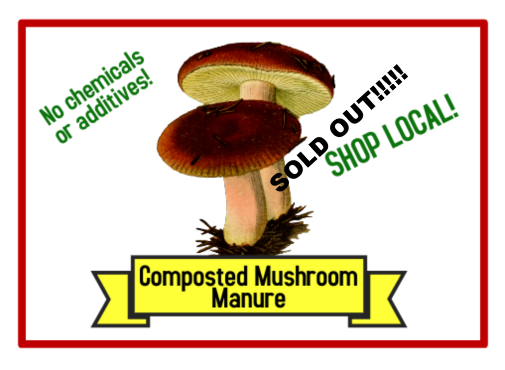 Composted Mushroom Manure - * Each bag of Mushroom Manure is 38 litres (approximately 40 lbs).* Composted mushroom manure plus compost: high quality all natural fertilizer and soil conditioner. The blend consists of composted mushroom manure and composted food & green waste.* The product has no chemical fertilizers or additives.* The soil conditioner will enrich your garden and flower beds. All products are lab tested and fully composted.* The composting temperatures gives the end product a 100% pathogen kill.* Minimum order: 6 bags. Order early and save!!