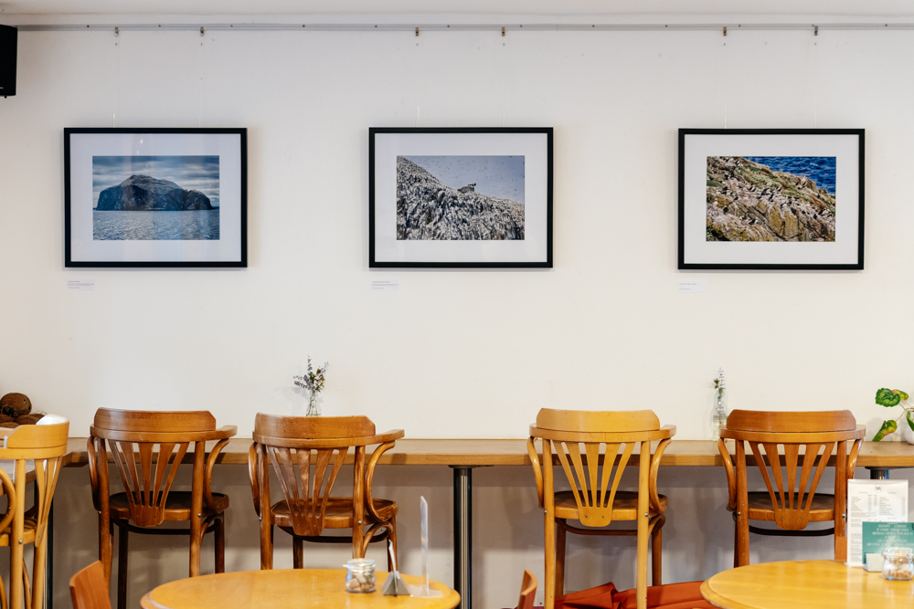 'Islands of Birds' at The Edge Café