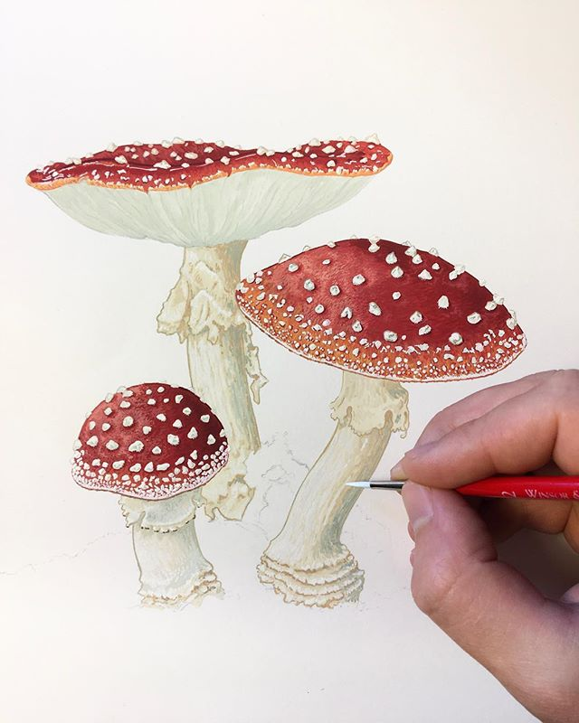 I've been working on this painting of Amanita muscaria, the fly agaric, for the past few days. If I've been a little quiet on Instagram lately, it's because I've been happily pouring much of my creative energy into my job at @openseadesignco. I'm lucky enough to work under the creative direction of the incredibly talented @melissa_open_sea, painting what I love most—the beauty of nature—for our line of paper goods. You can see more of our work in our online shop at openseadesignco.com.