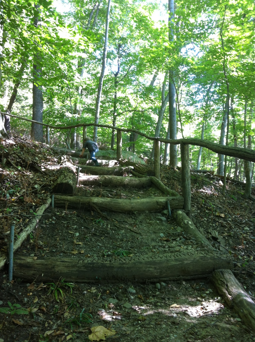 Woodland Trail at Boscobel — little hikes