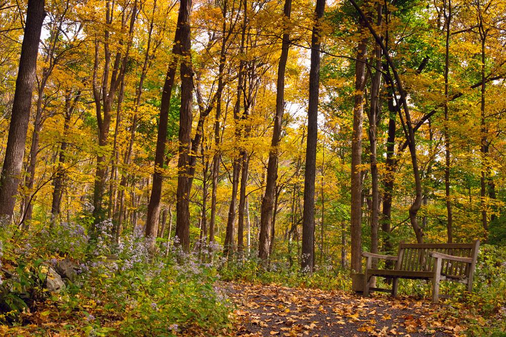 fall 22.jpg