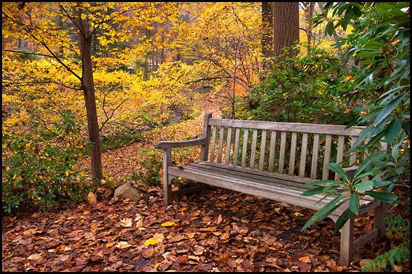 Fall LJB October 5.jpg