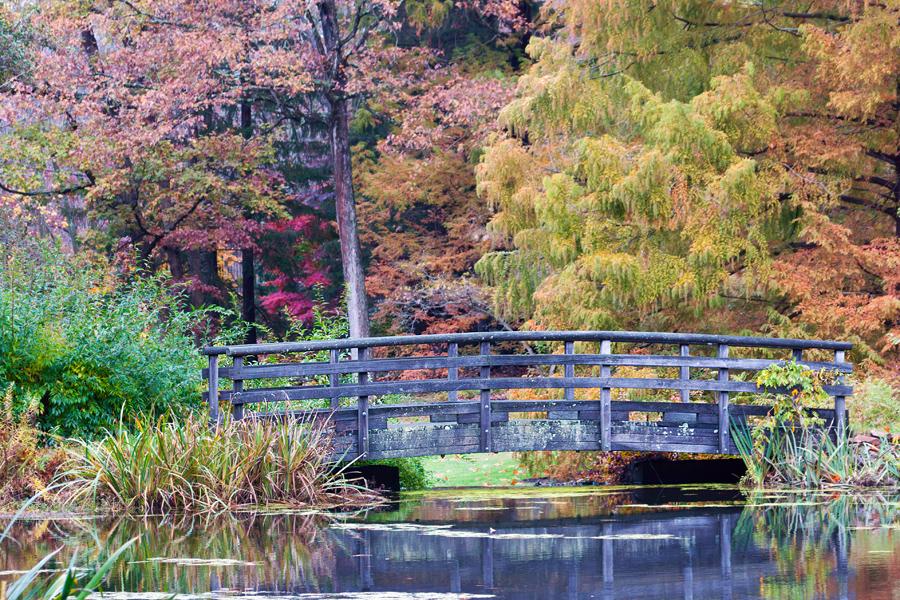 Garden Fall.jpg