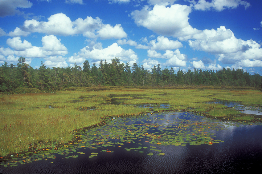 Bog and Day Sky IIa 1.jpg
