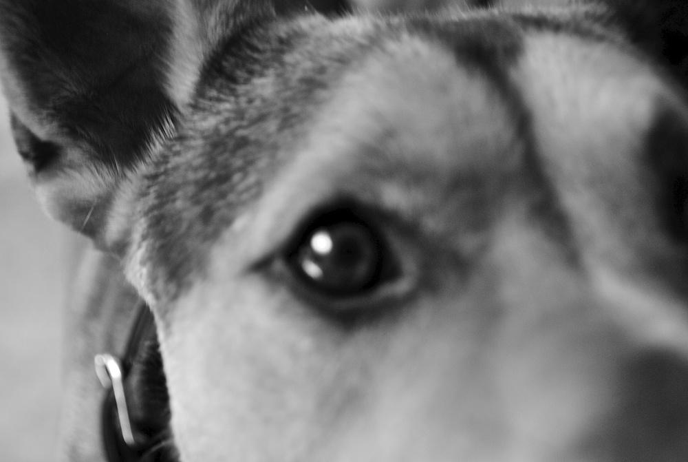 Jax the nervous dog