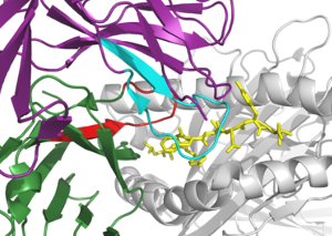 T-cell receptor repertoires