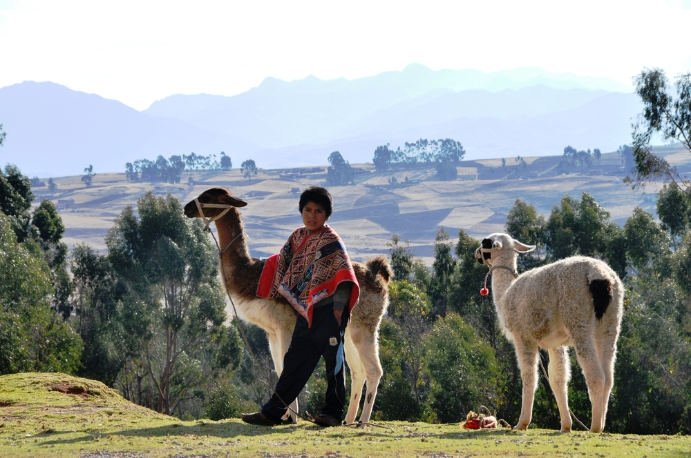 this kid and his llamas. his cheeks and face were red due to the harsh sun at the high altitude.