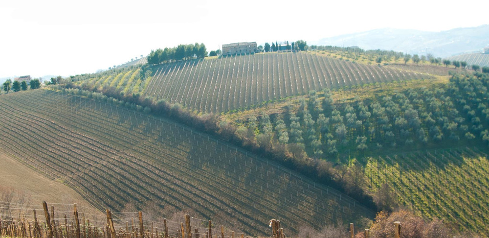 Vineyard in Umbria
