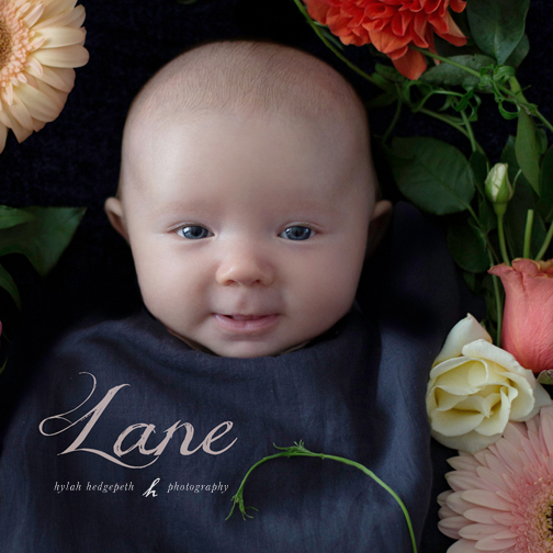 sherman oaks newborn baby girl photographer