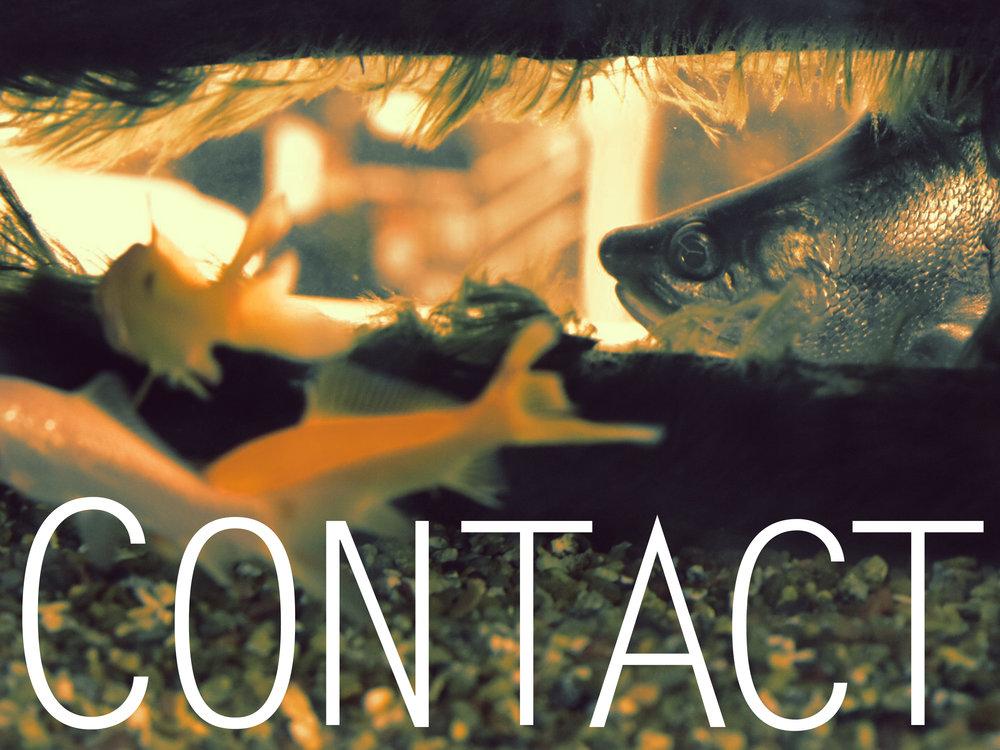 contact fish.jpg