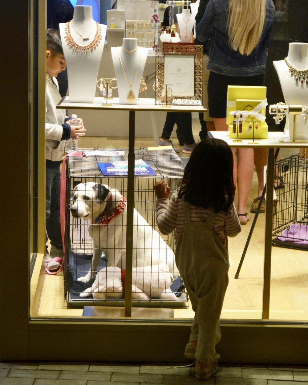 A young passerby stares into the storefront window at Bella, one of our rescue dogs that was recently adopted into a loving family.