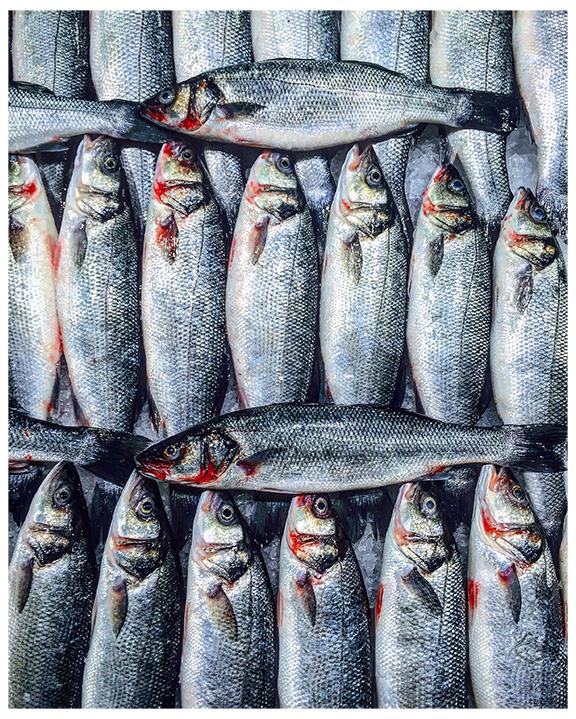 maha-munaf-abudhabi-fishmarket-b.jpg