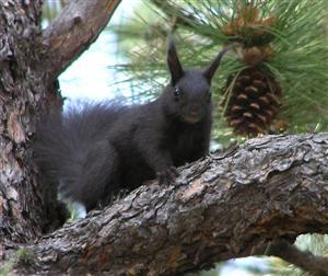 Squirrel looking at me looking at him