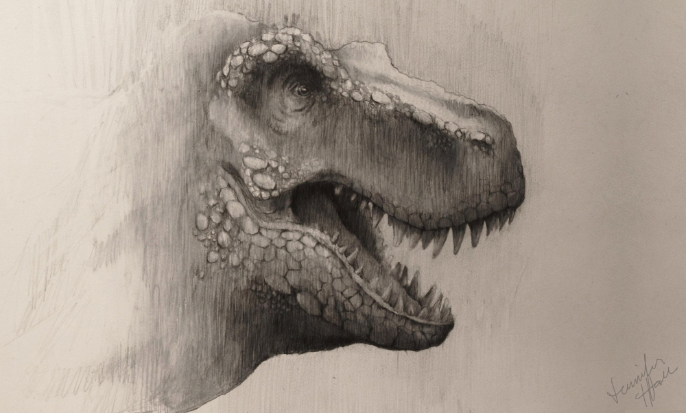 Sketch of a Tyrannosaurus rex. Graphite on paper. Copyright Jennifer Hall