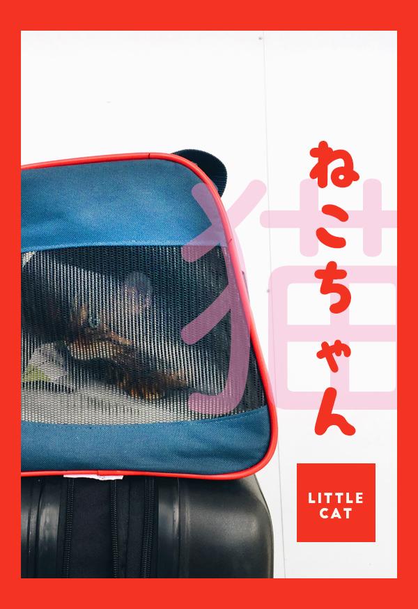 vocab-poster_0000_neko-chan.png