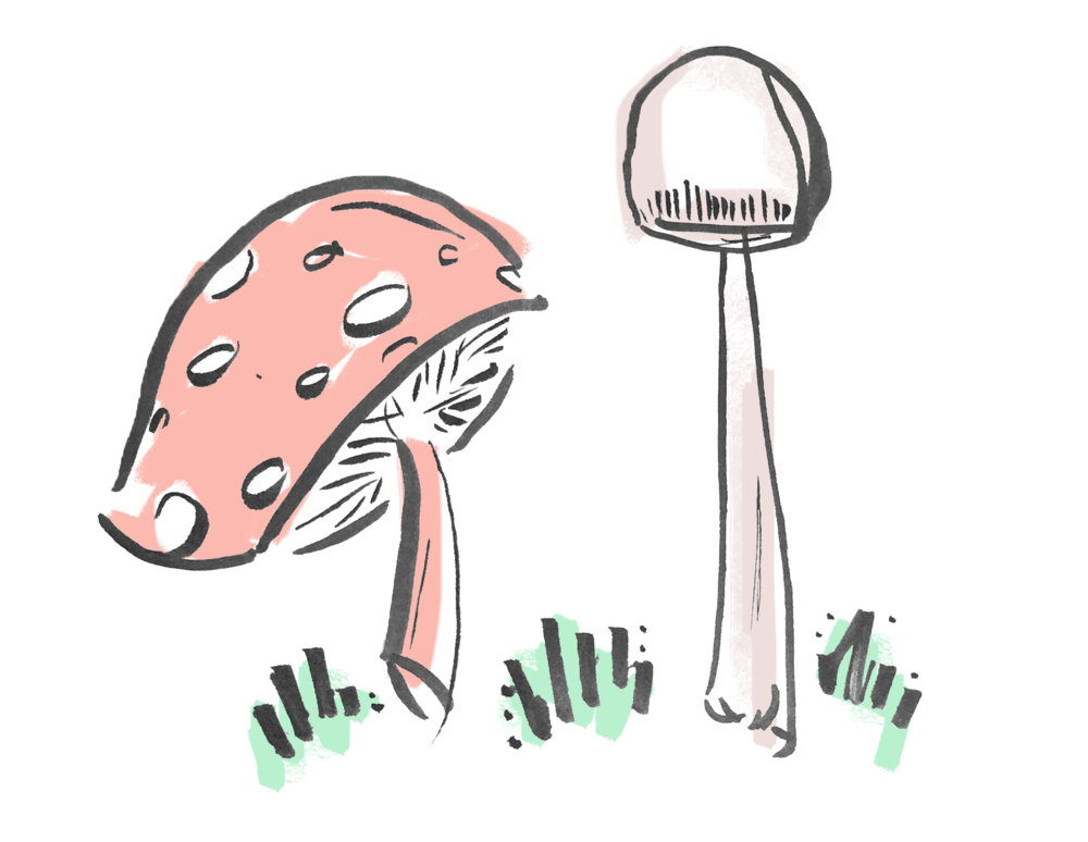mushrooms.png