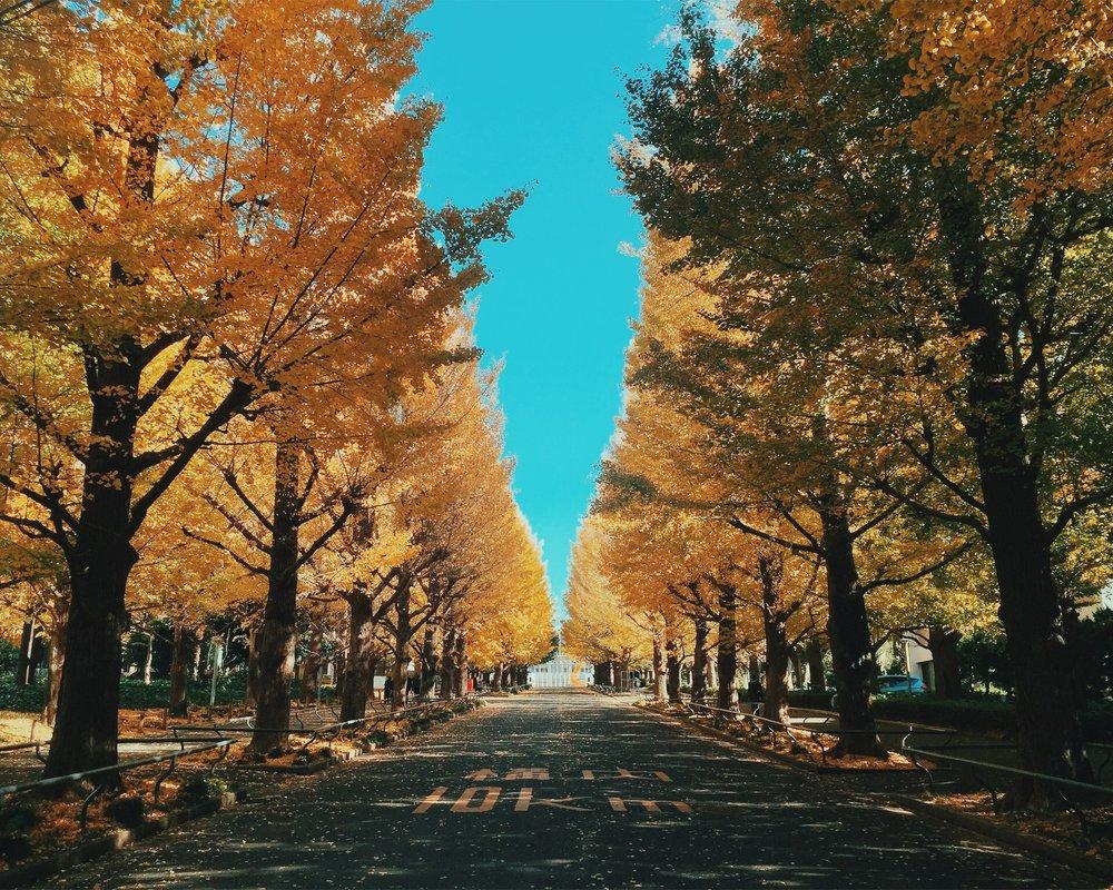 hiyoshi-campus.jpg