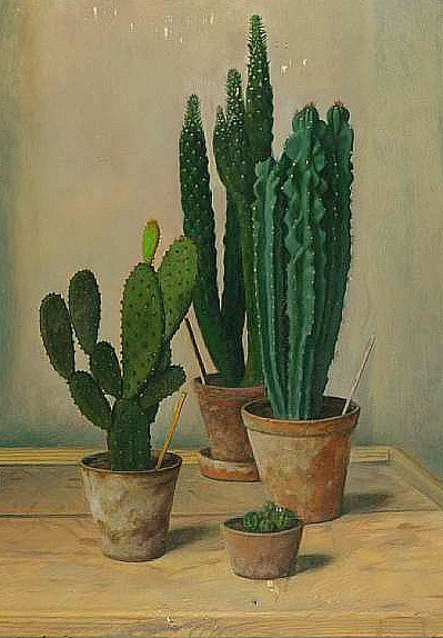 Robert Knaus // study of cacti // 1900