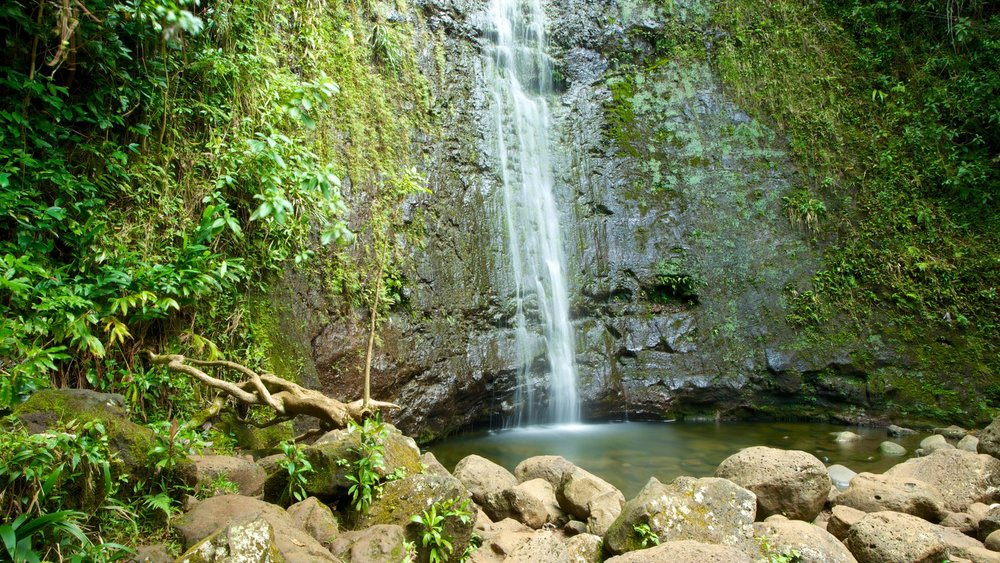Manoa Falls Trail, Oahu