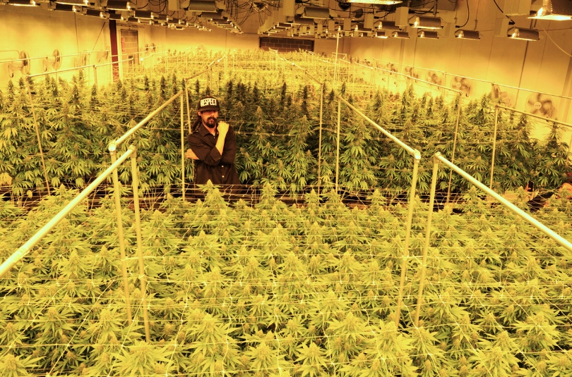 photo: Mark Sink Damian Marley in a cannabis grow space in Denver, Colorado run in partnership with TruCannabis on Sept. 22, 2016.