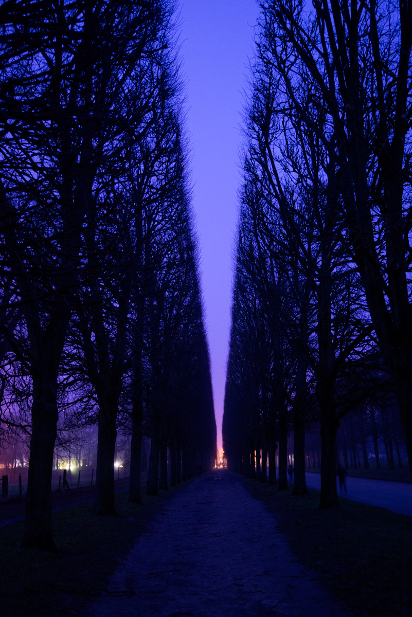 Night-Trees.jpg