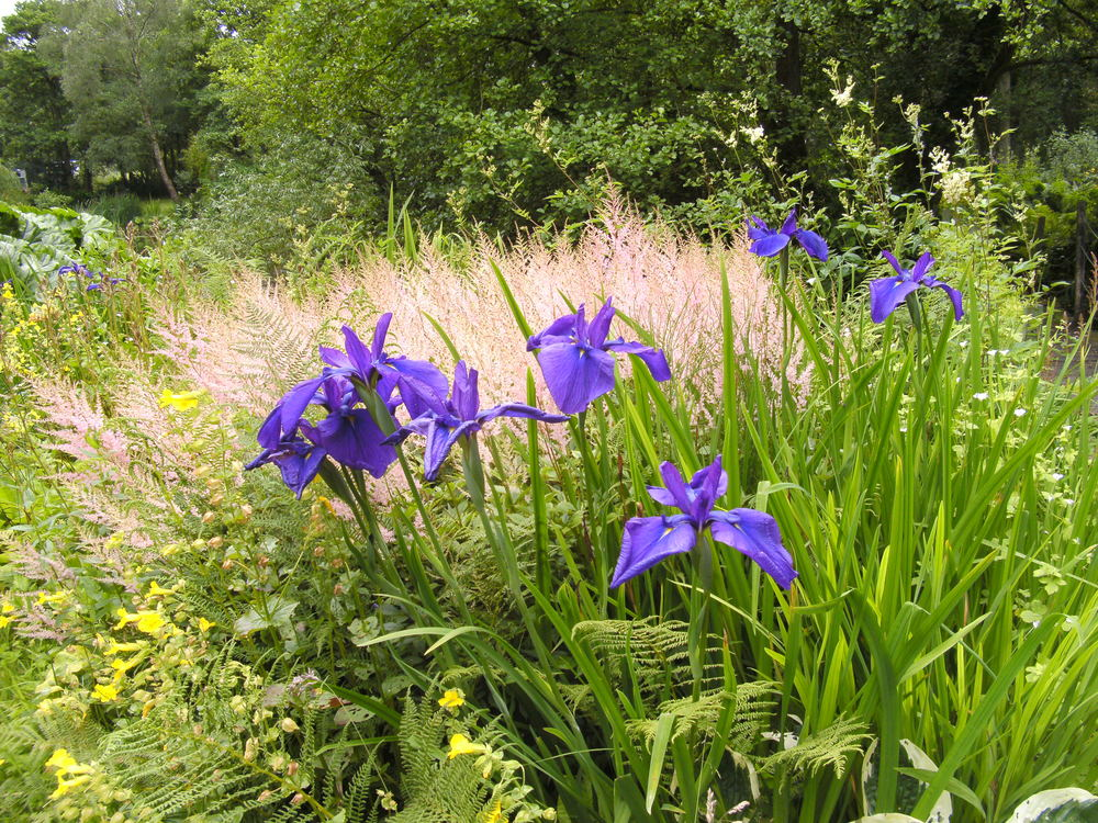 Stonyford Cottage Garden and Nursery, Cuddington Photographer: Gwyn Woodward