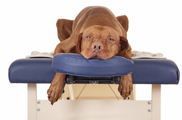 massage at Precision Movement
