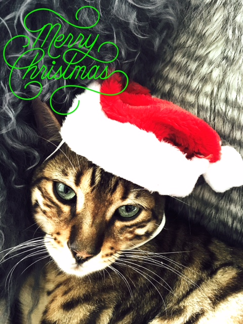 Wishing you a healthy, happy and festive Christmas season!    Much love  from KT and the little boy who keeps me sane - my beautiful cat Watson  xXx