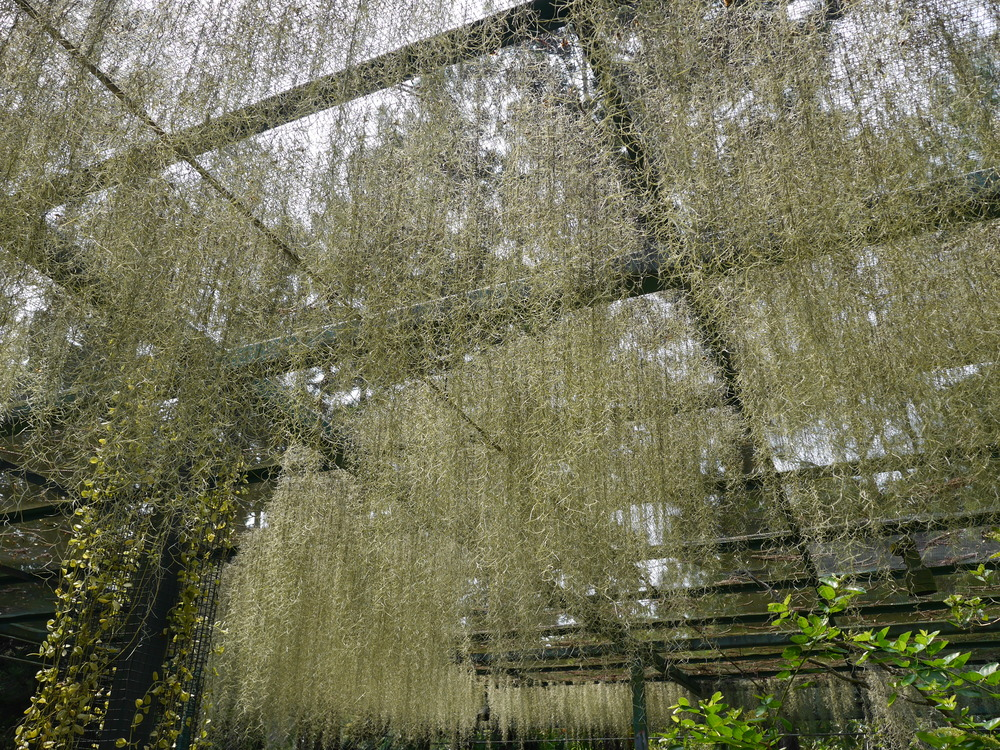 Not Spanish Moss, but really cool stuff hanging from above.