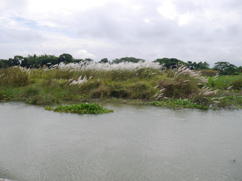 Lots of greenery in Bangladesh.