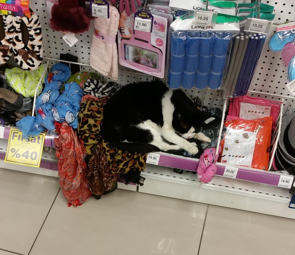 Sleepy kitty.