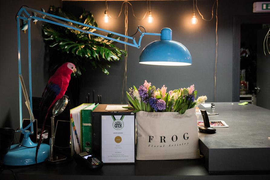 frog-126.jpg