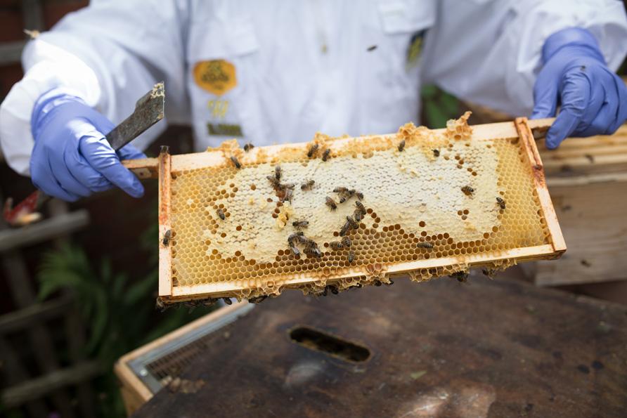 bees-16.jpg