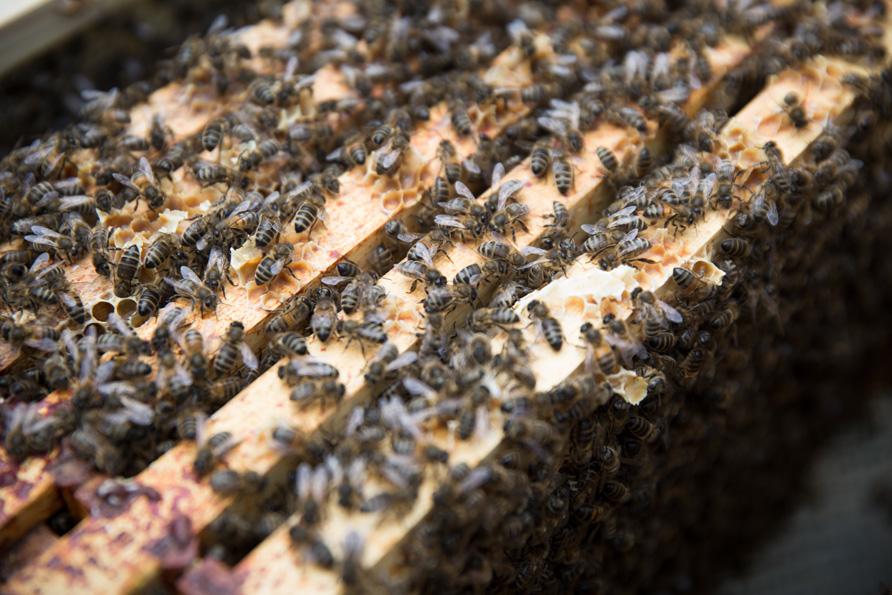 bees-23.jpg