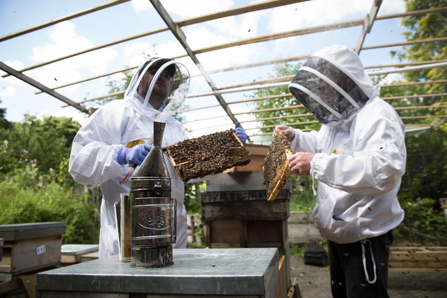 bees-27.jpg