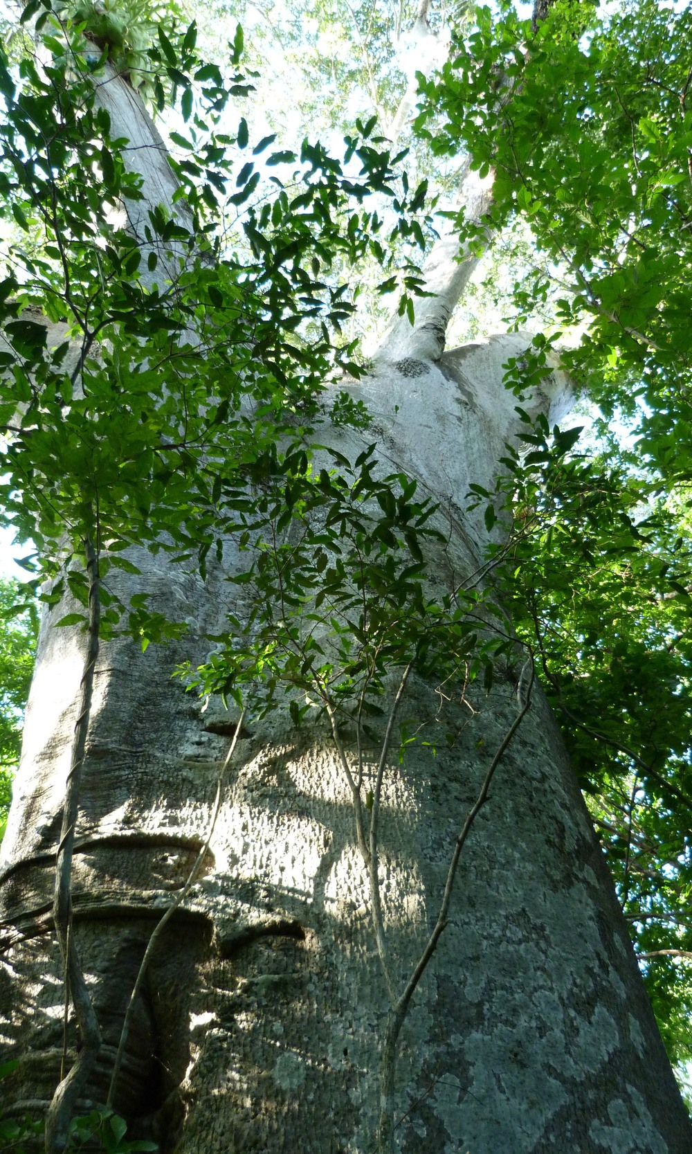 2 - Trees (2).JPG
