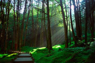 sun forest.jpg