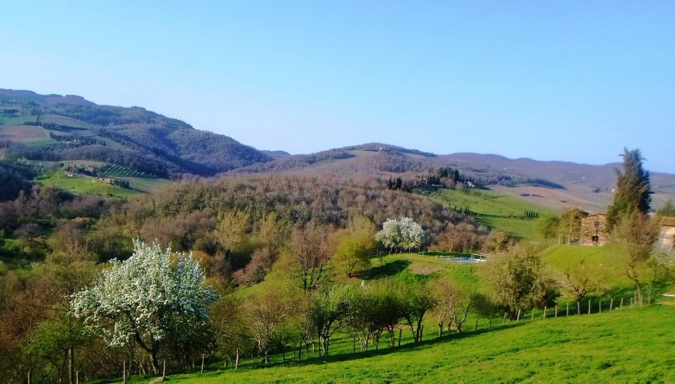 Hillsides of Tuscany