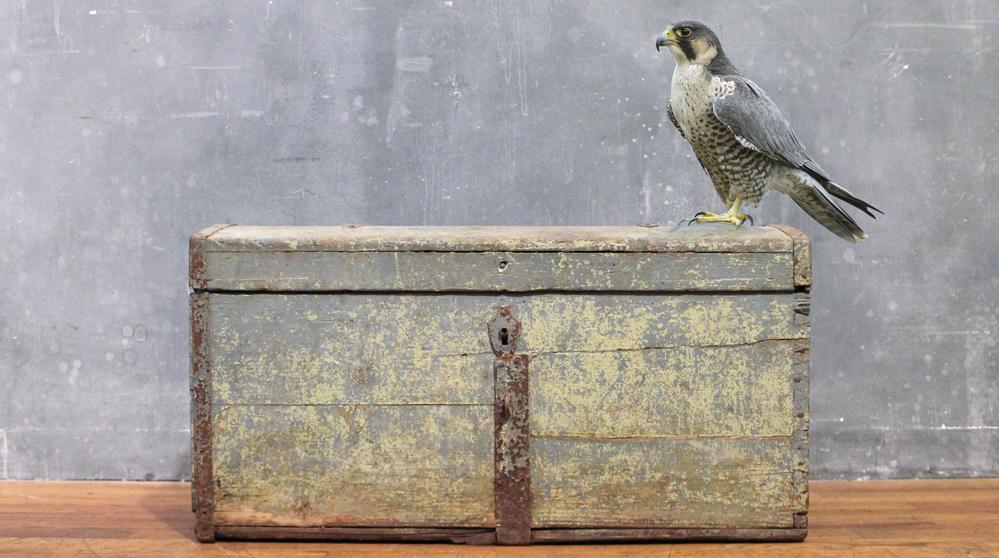 falconry idfa 2.jpg